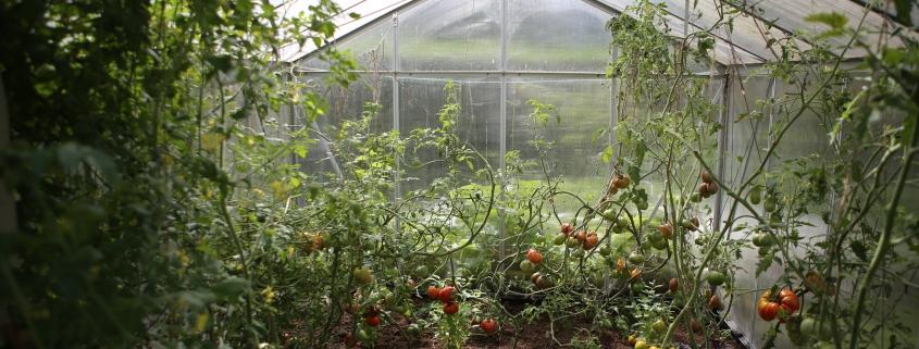 Productos para el riego de tu jardín