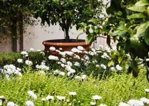 verano-jardin-sertecriego